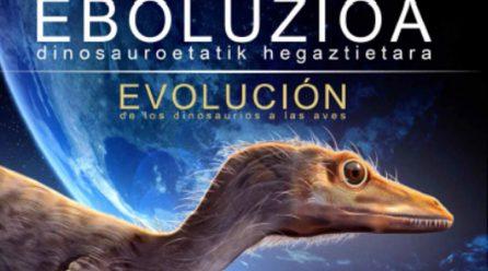 Eboluzioa:  Dinosauroetatik  hegaztietara