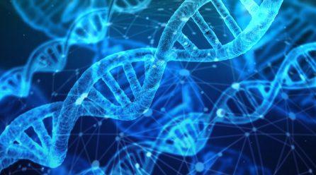 Cruz  Gallástegui:  Introductor  de  la  mejora  genética