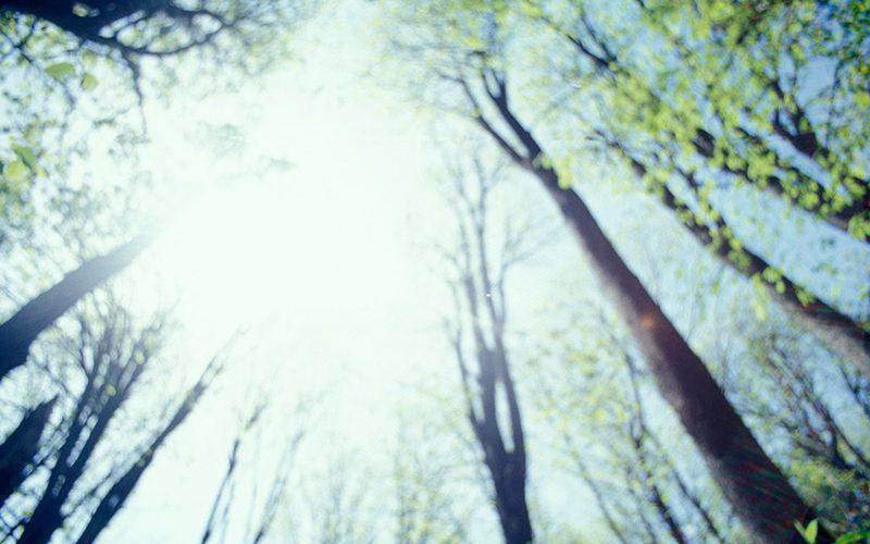 Energia  eta  adimen  artifiziala:  bilakaera  eta  etorkizuna