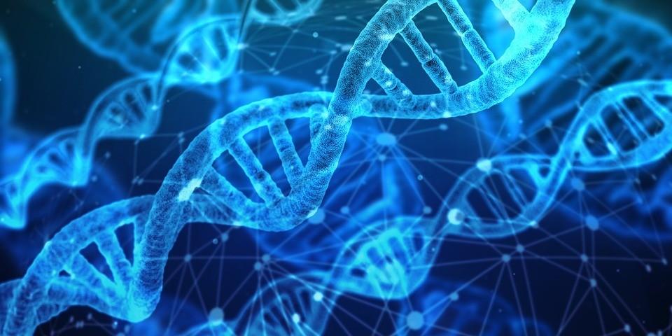Kruz Gallastegi: Introductor de la mejora genética